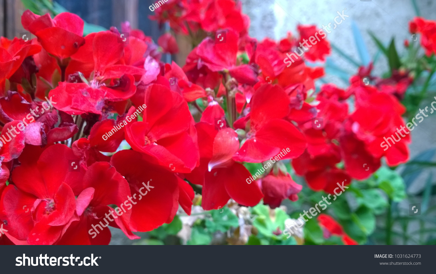 - stock photo a beautiful bunch of red flowers 1031624773 - A beautiful bunch of red flowers